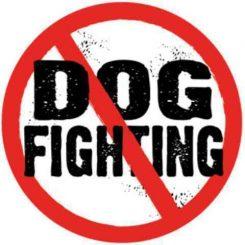 dog_fighting_circle